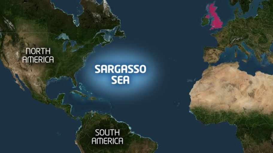 Sargasso Sea On World Map.The Plan To Save The World S Eels Cbbc Newsround