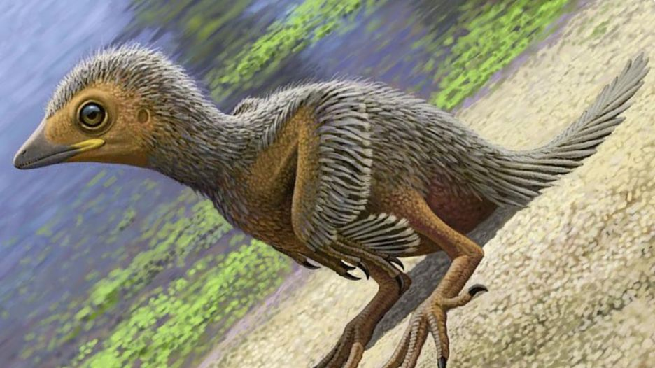 Reconstruction of fossil