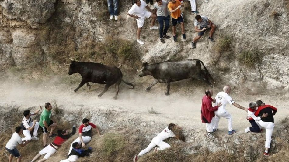 Runners are chased by bulls in the village of Falces, northern Spain, on 15 August 2019
