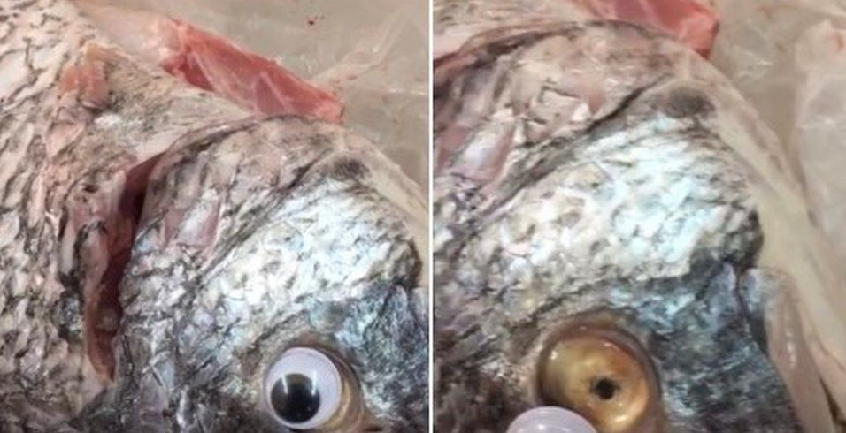 Googly-eyed fish