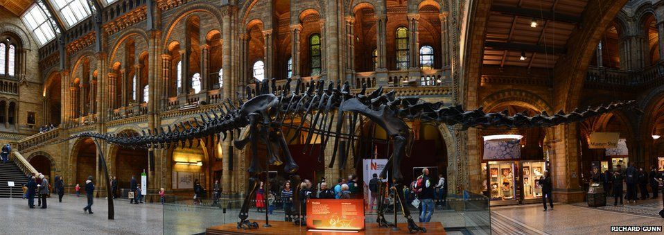 Dippy the dinosaur in the museum foyer