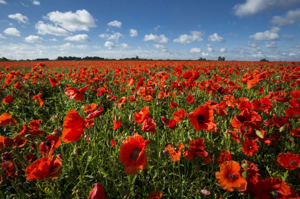 Guide What Is Remembrance Day Cbbc Newsround