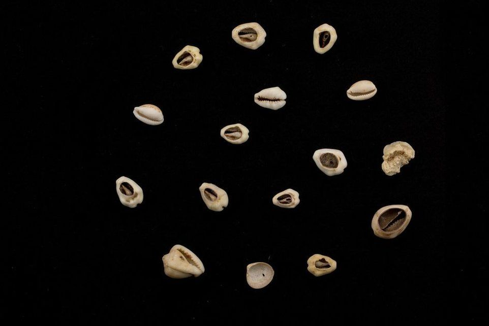 Cowrie shells also form part of the collection