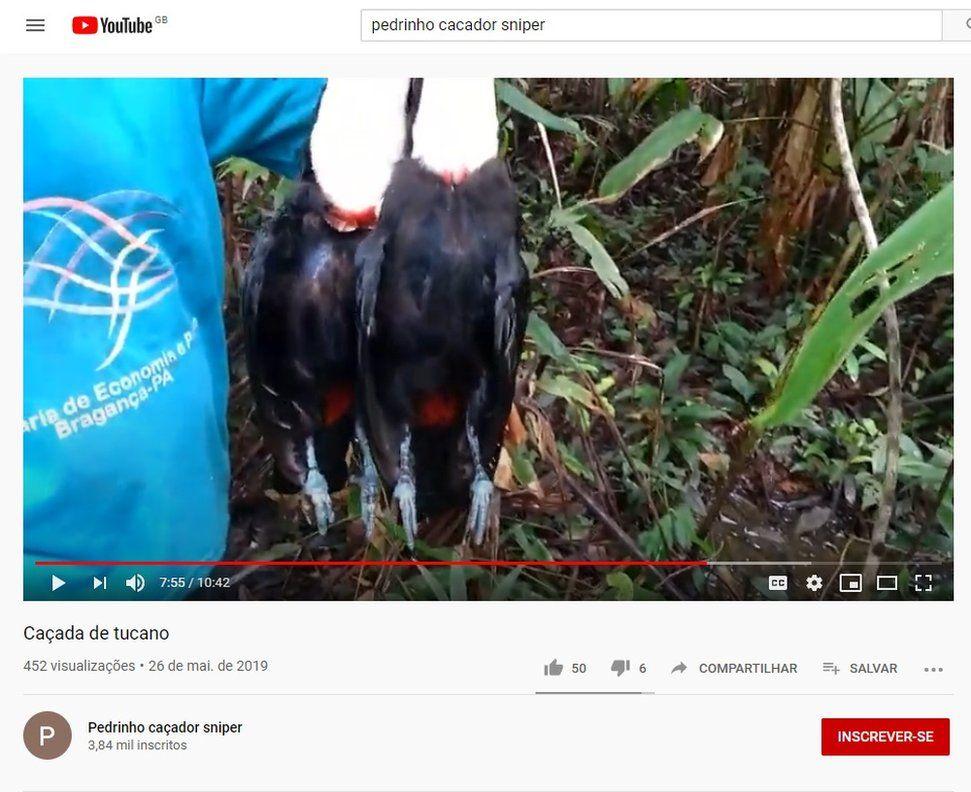 Tucanos abatidos por caçador