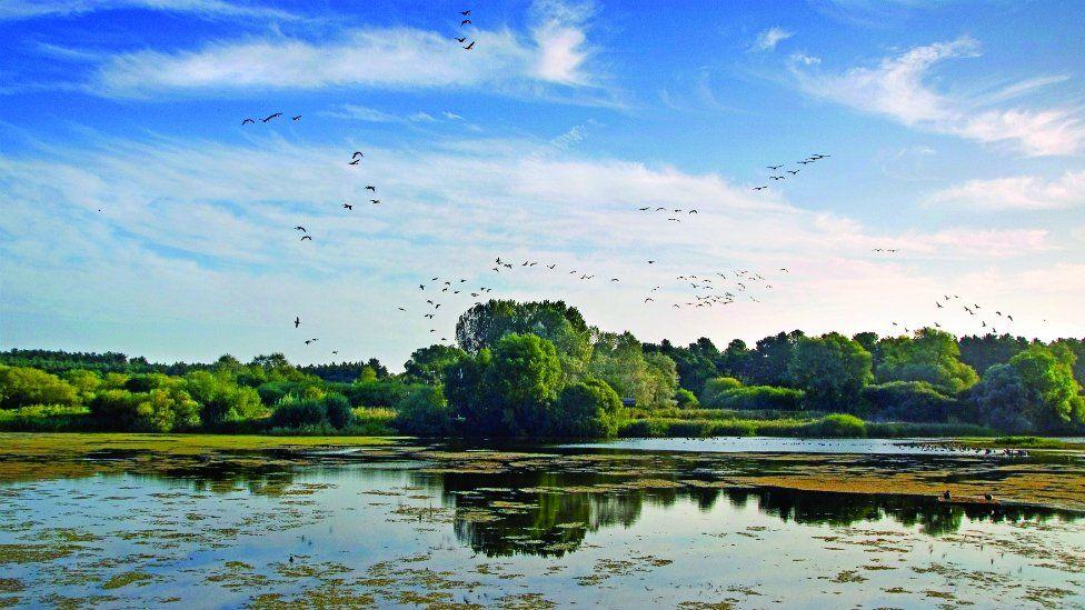 Lackford Lakes
