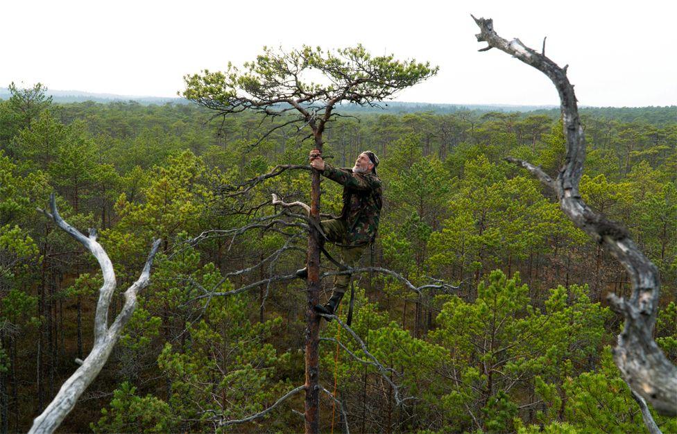 A man climbs a tall tree