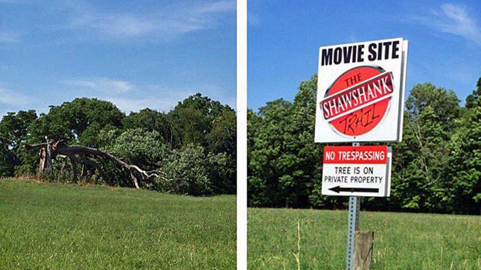 Felled Shawshank tree