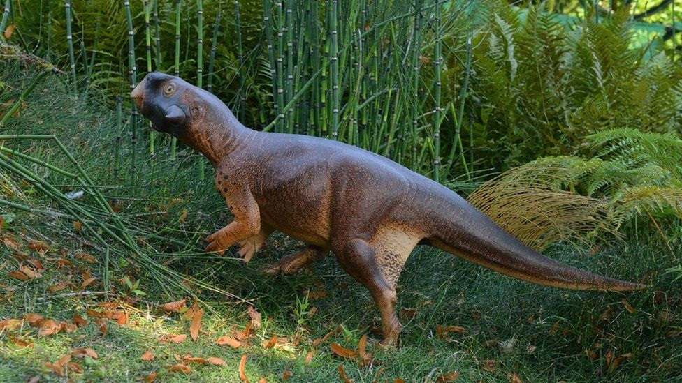 3-D reconstruction of Psittacosaurus