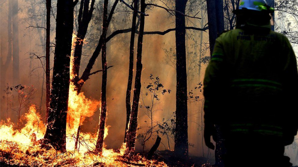 A firefighter facing a fire stands with their back to the camera