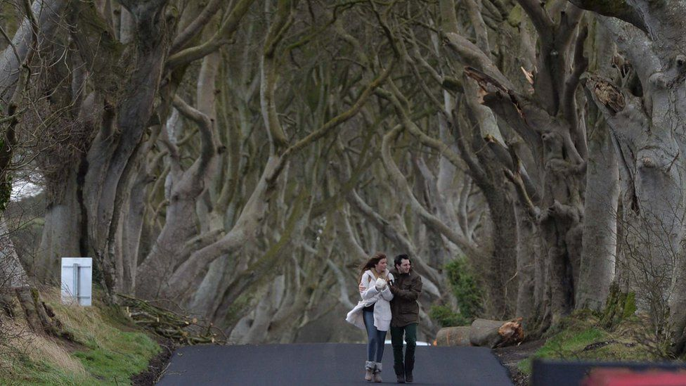 Game Of Thrones fans walk along the Dark Hedges