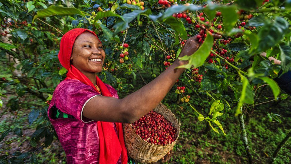 Arabica originated in the highlands of Ethiopia
