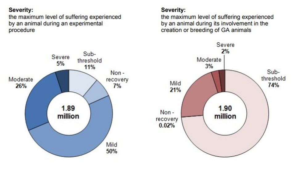 A pie chart showing the severity of animal research