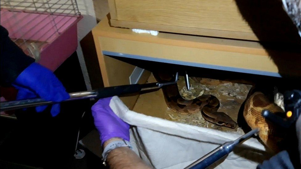 Snake in a drawer