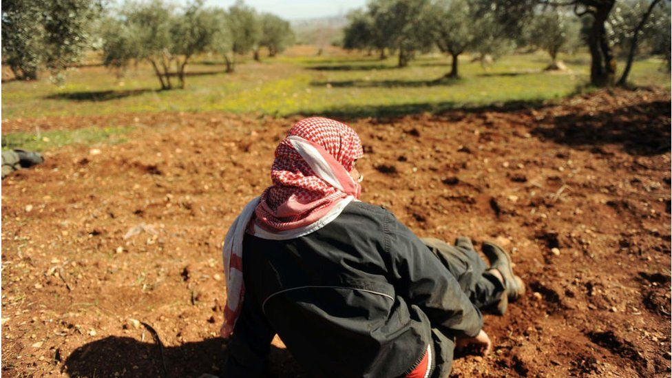 Syrian man sitting in an olive grove in Idlib (file photo)