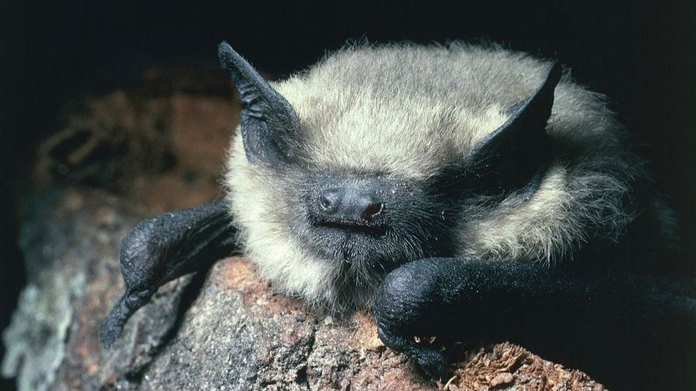 Bats benefit from protected farmland hedgerows