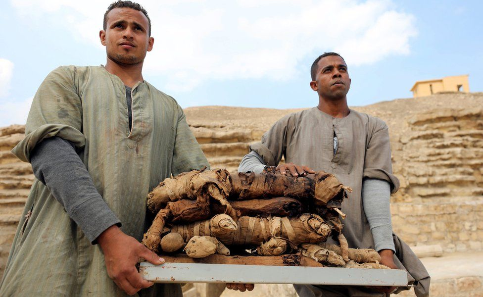 Workers at an archaeological dig carry mummified cats, Saqqara, Egypt - Saturday 10 November 2018