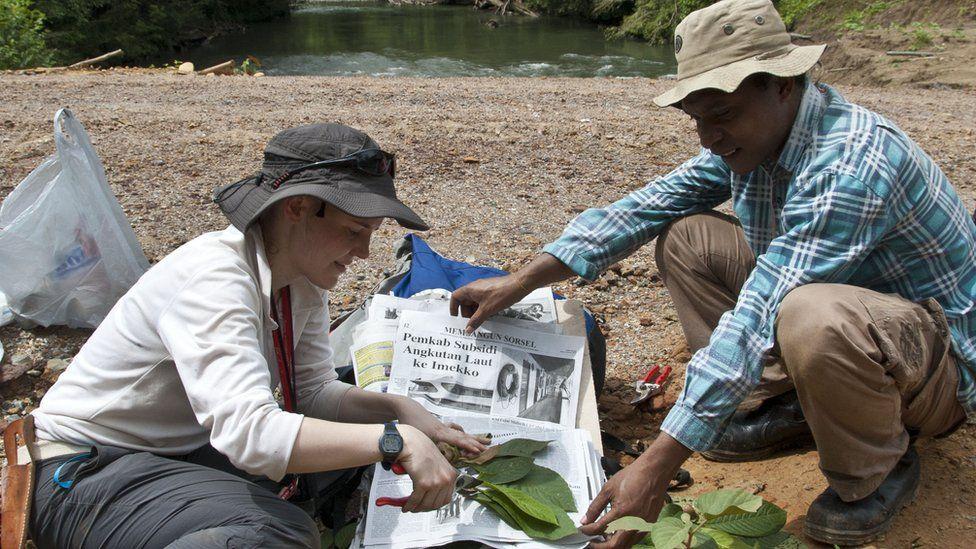 Botanists preparing plant specimens in the Tamrau Mountains