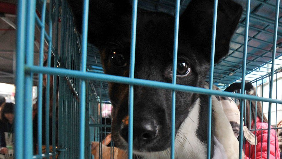 A caged stray dog in Taipei, 6 January 2013