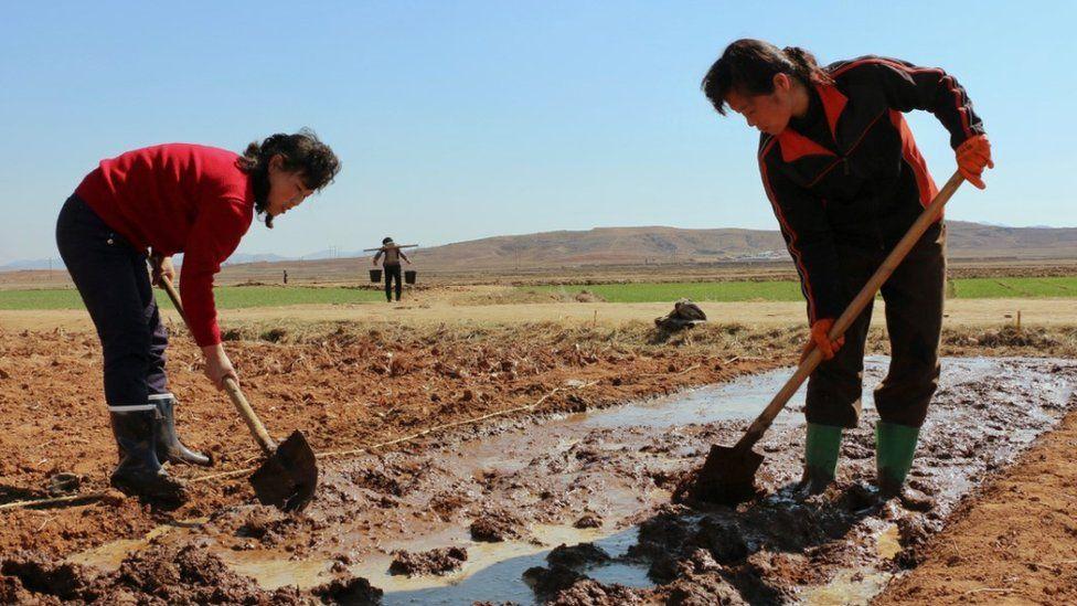 Two women work in a field in North Korea