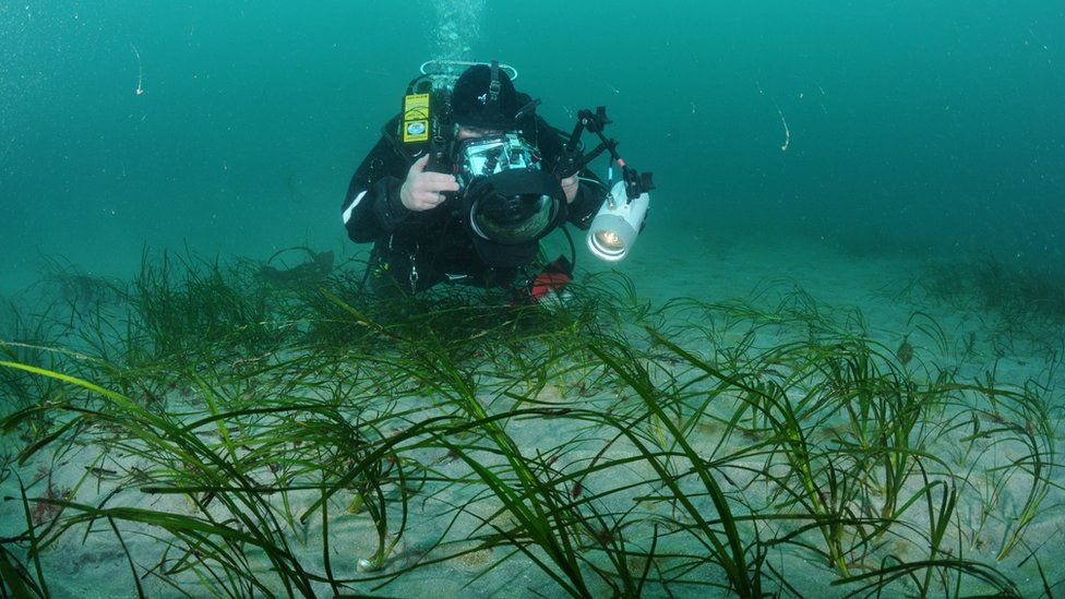The sea grass site in Waterfoot, County Antrim, is an important nursery for juvenile fish