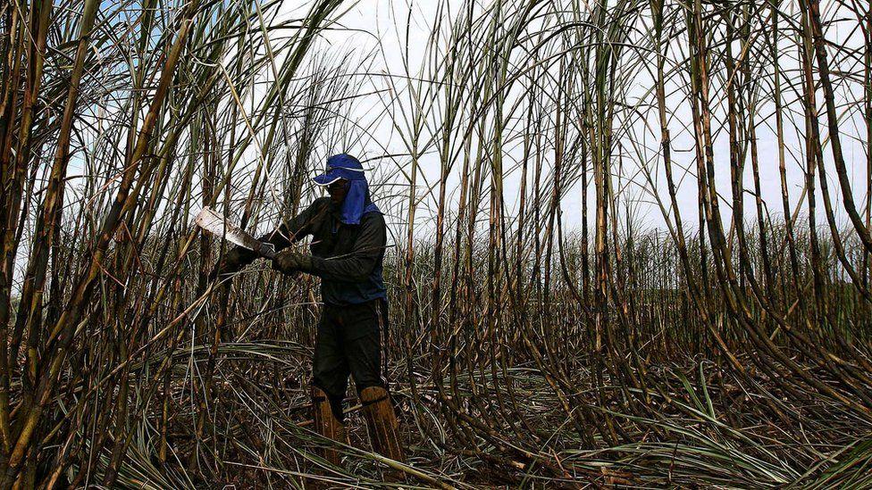A Brazilian sugarcane worker