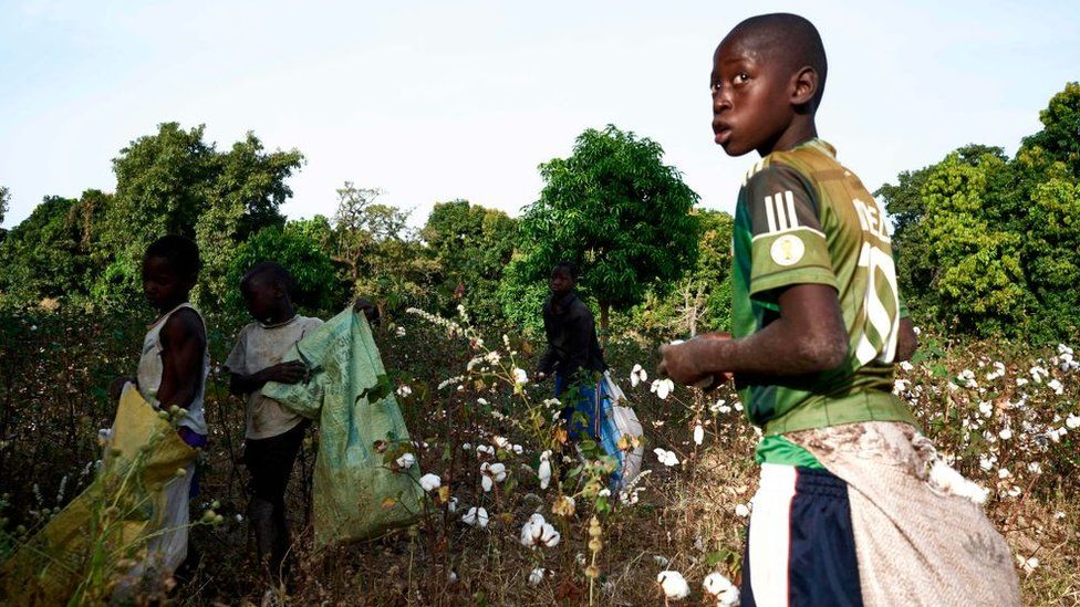 Children pick cotton during the harvest in southern Mali on November 29, 2018