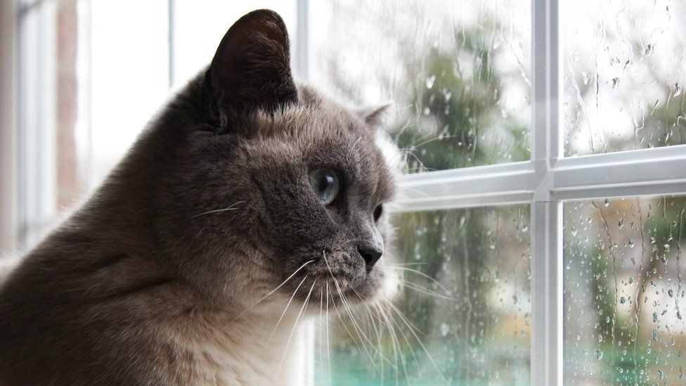 A cat looking out of a wet window at the rain