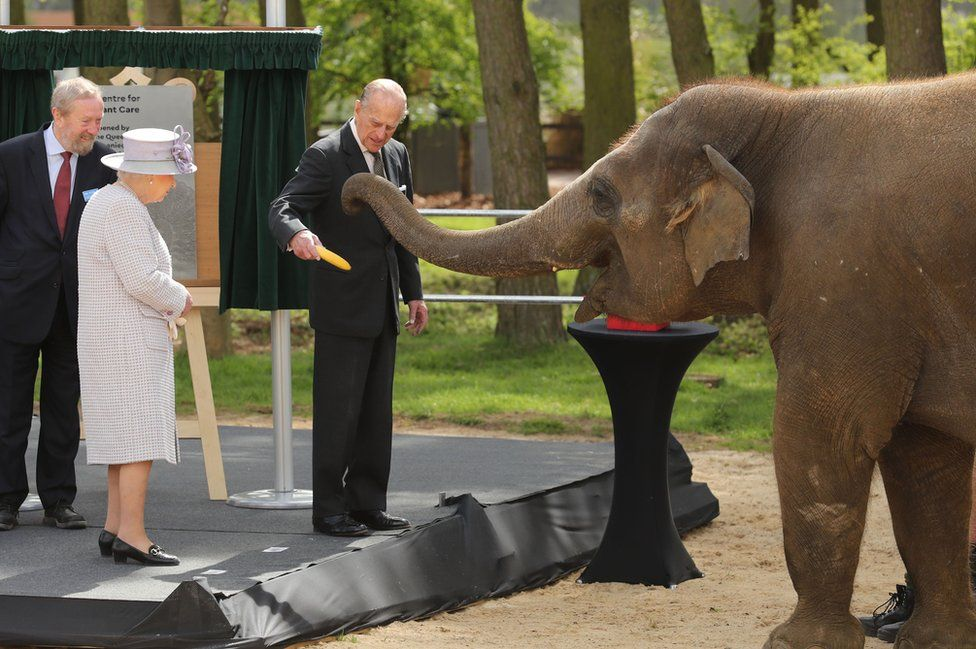 Queen Elizabeth II and the Duke of Edinburgh with an elephant at ZSL Whipsnade Zoo, where they officially opened the zoo's new Centre for Elephant Care as part of a visit to Bedfordshire