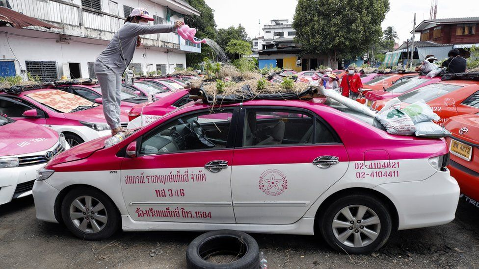 A worker watering plants on the roof of an abandoned taxi.