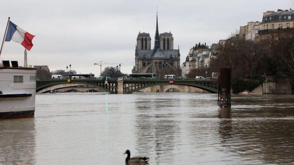утка на фоне потопа