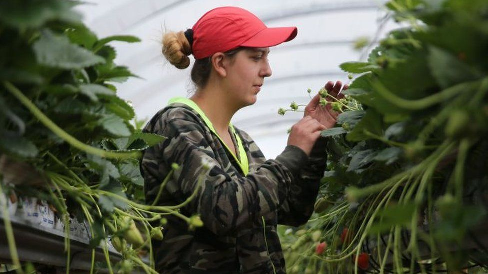 A woman picking fruit