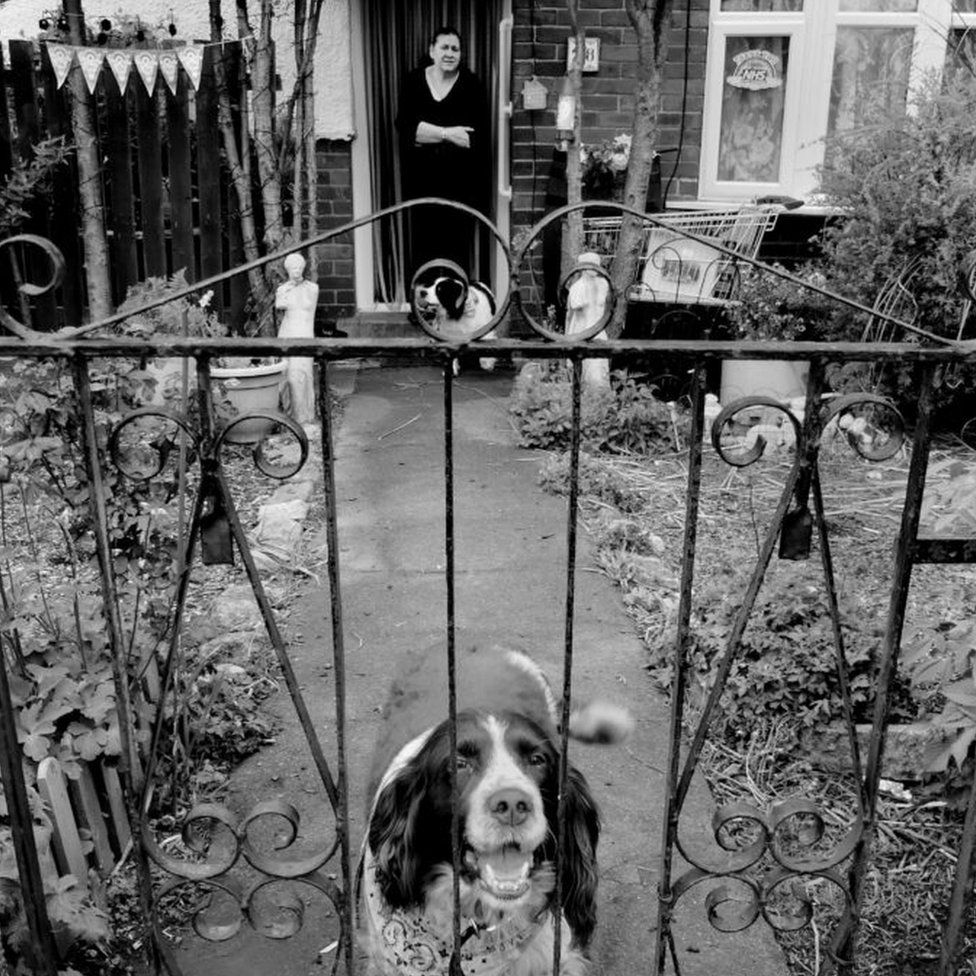 Dog at the gate