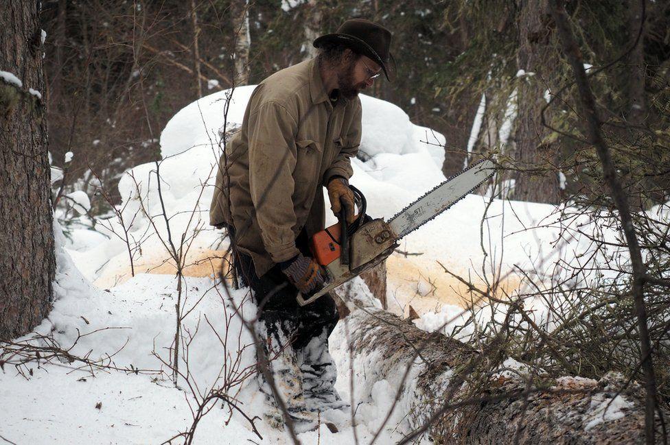David cuts down trees