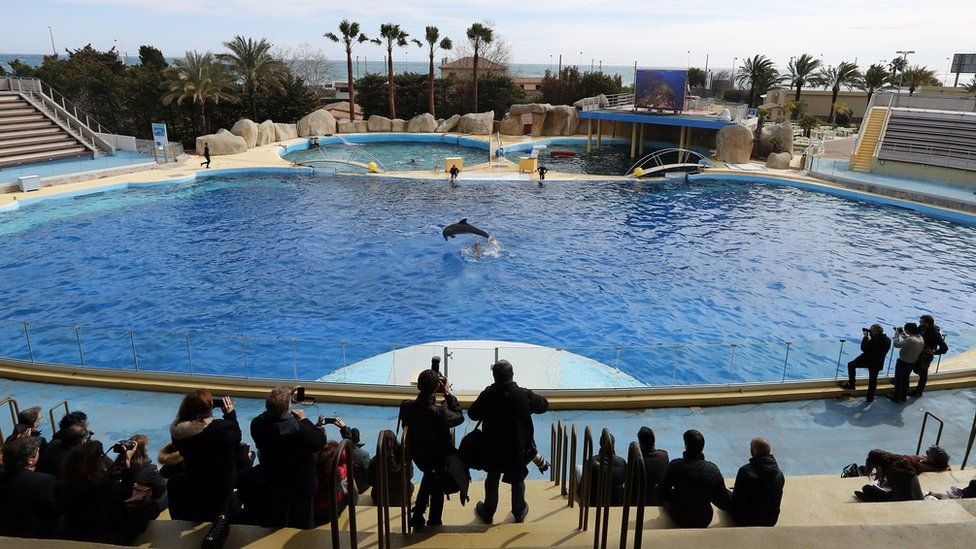 People look at a dolphin jumping in the pool at the Marineland theme park in Antibes, south-eastern France