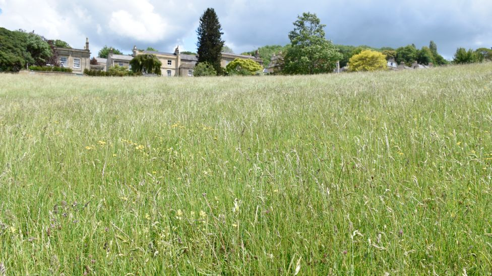 Bath wildflower meadows project to be expanded