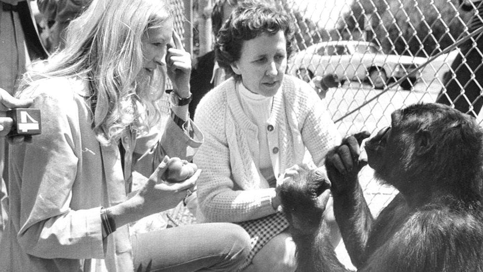 File picture of Francine Patterson (L) with gorilla Koko and June Monroe, an interpreter for the deaf (C)