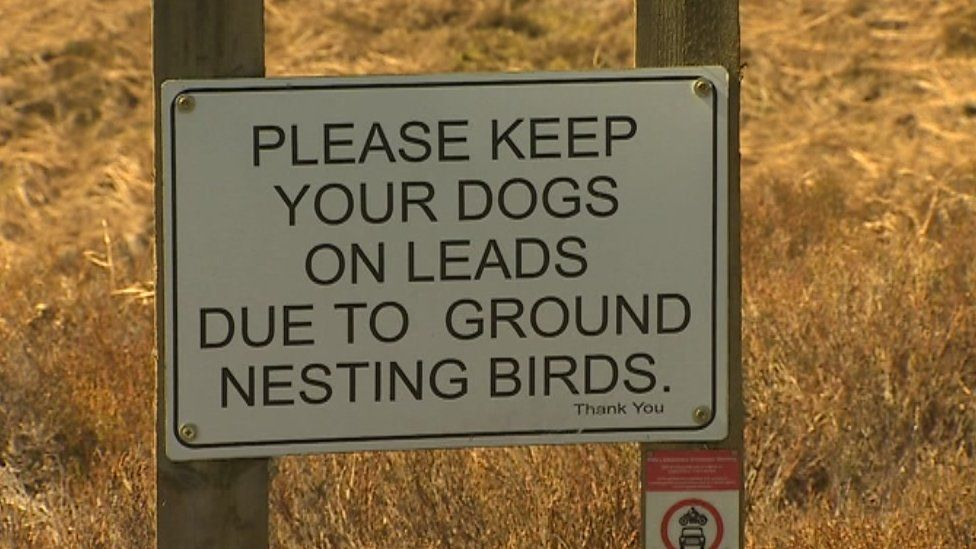 A sign saying 'Please keep your dog on a lead due to ground nesting birds'