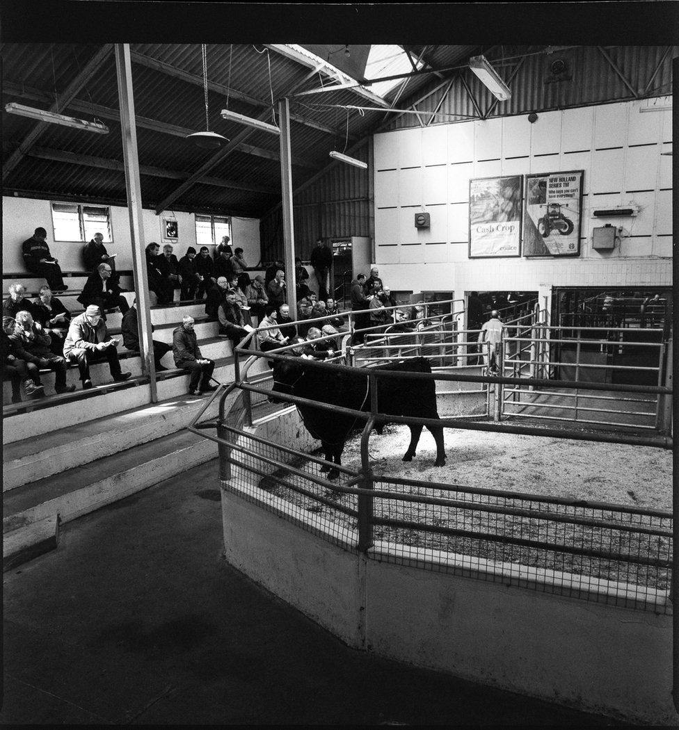 Cattle in Bandon Mart surrounded by a crowd of people