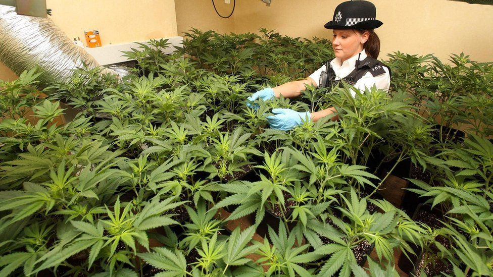 Police officer with plants