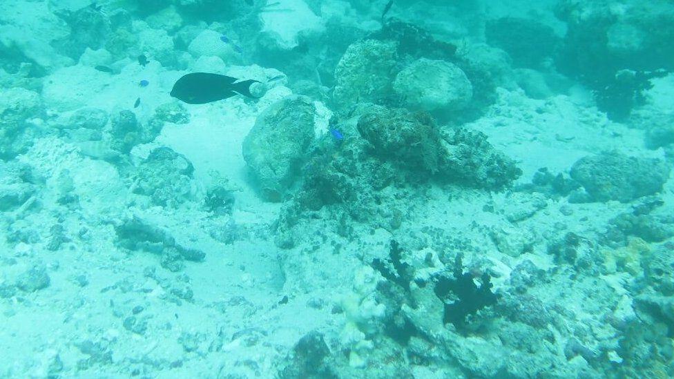 Reef damage