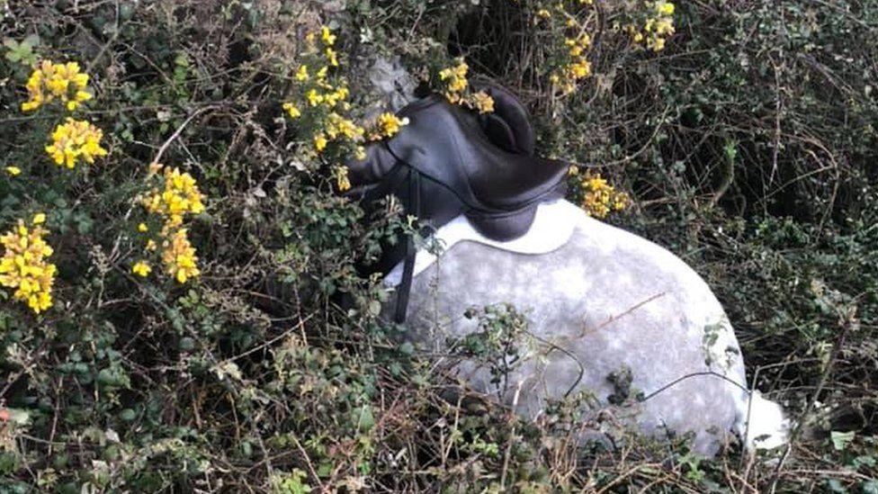 Horse stuck in ditch