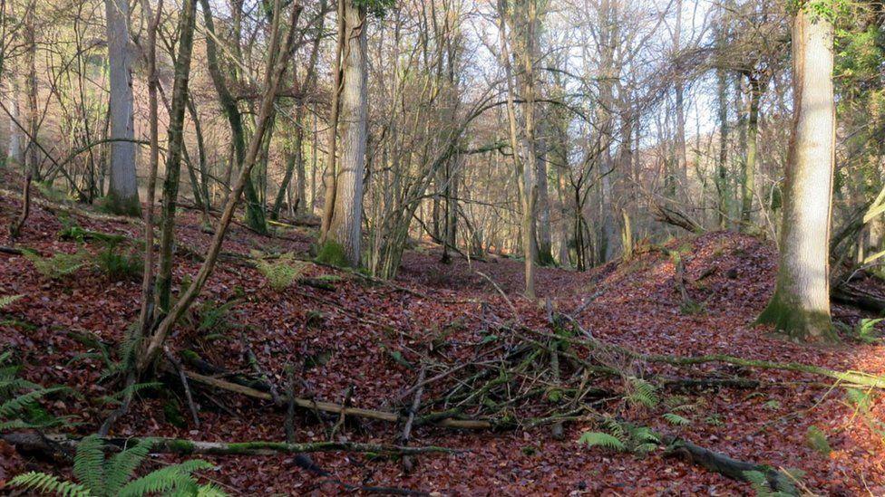 Coedwig Lady Park Wood yn yr Hydref