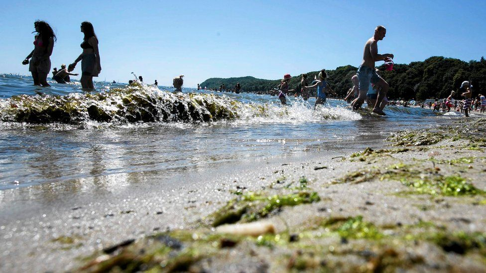 Toxic algae are seen on the beach in Gdynia, Poland, 3 July