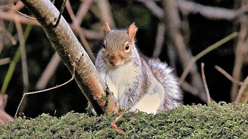 Squirrel in Linn Park Glasgow