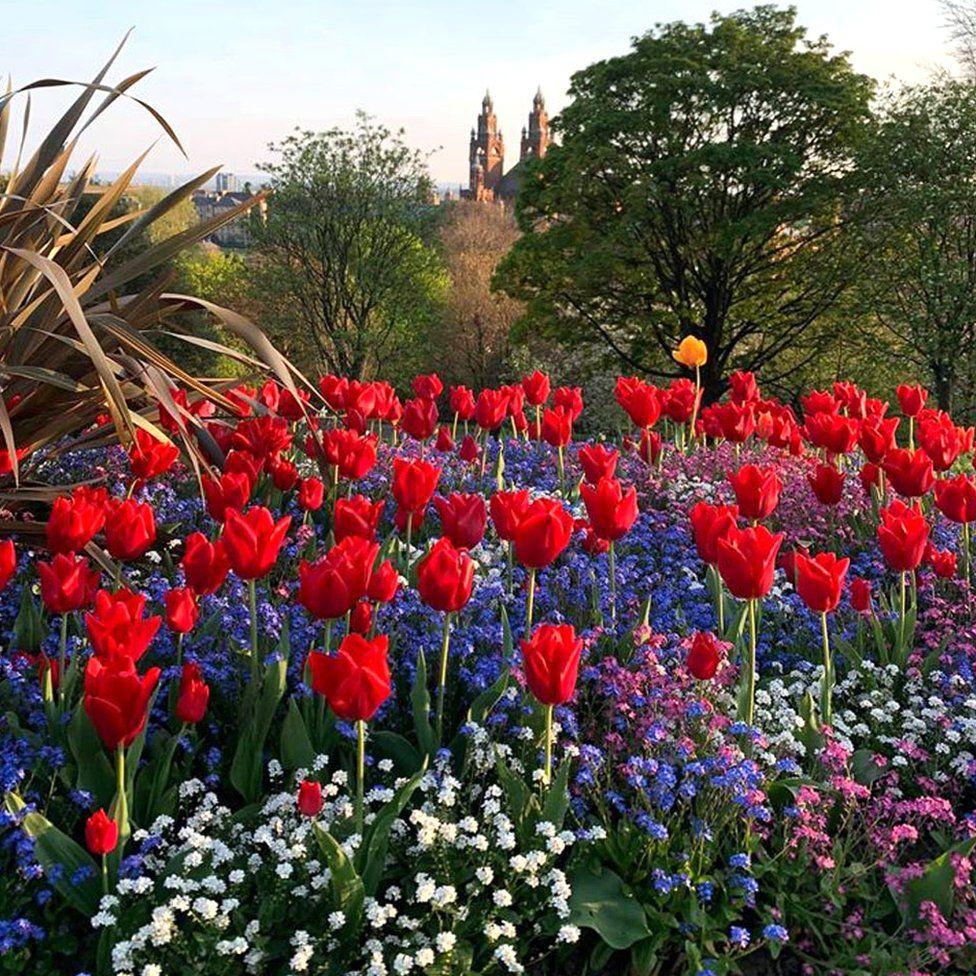 Flowers in Glasgow
