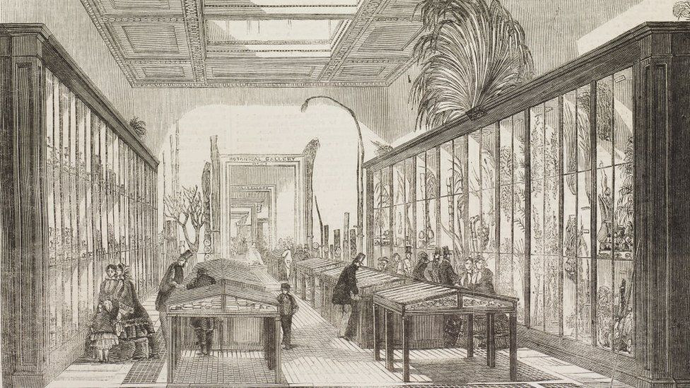 Botanical room of the British Museum in 1858