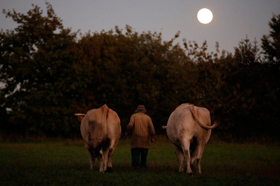 Jean-Bernard with two oxen in a field with the sun low in the sky