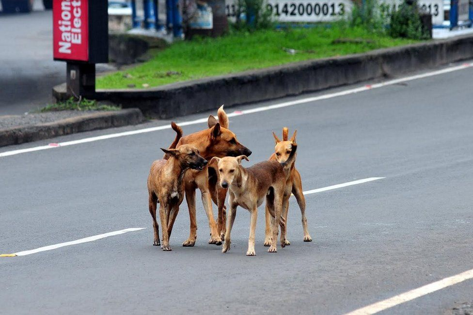 Stray dogs on a street