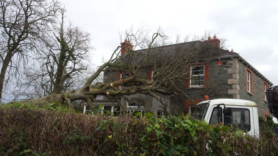 A fallen tree on a house in Drumbeemore in County Armagh