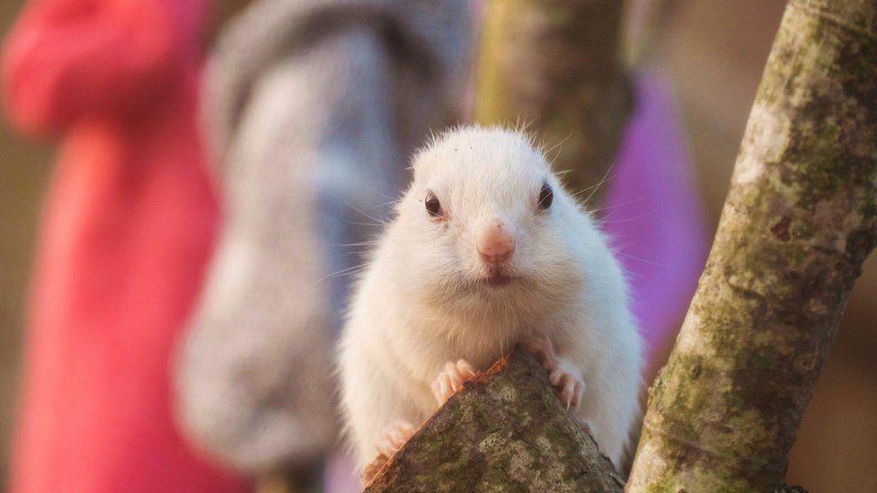Longleat Safari Park chipmunks sent hundreds of socks